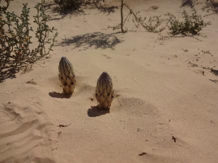 désert de sable tunisie Douz